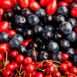 Berries — Stock fotografie