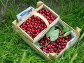Baskets full of cherries — Stock Photo