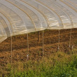 Plastic green house — Stock Photo #3150371