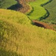 Terraced fields in china (1) — Stock Photo