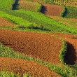 Terraced fields in chin(3) — Stock Photo #3180444