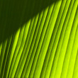 Banana leaf detail (2) — Stock Photo