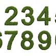 Stock Photo: Grass numbers