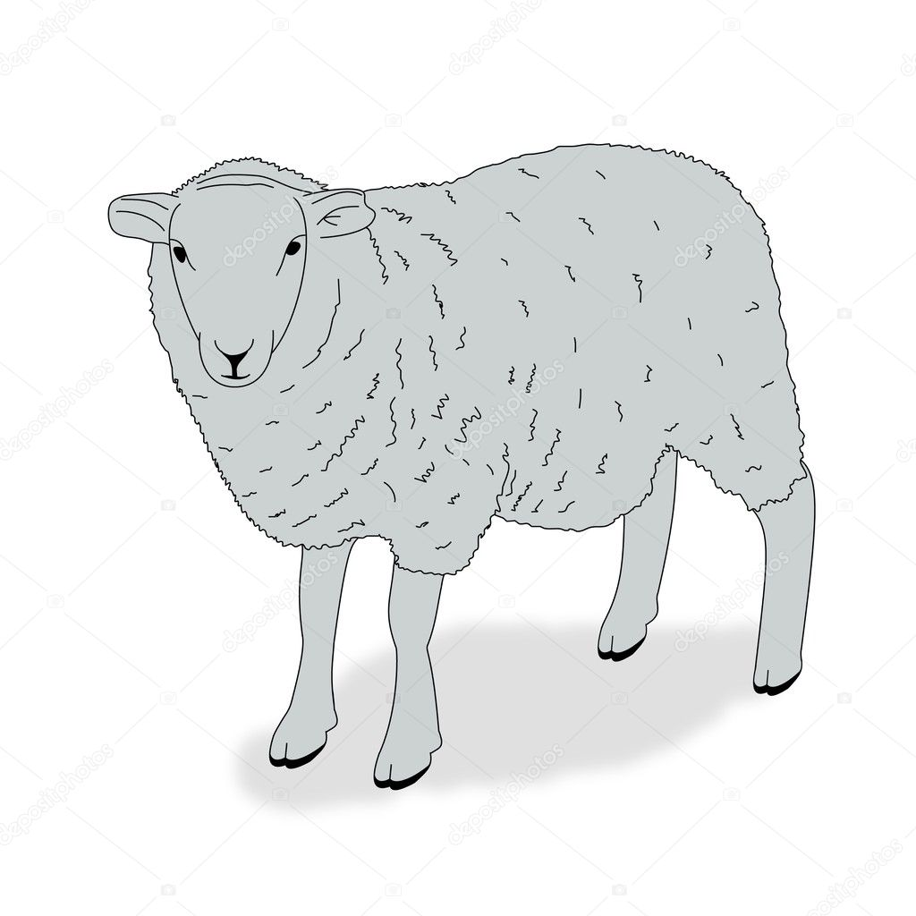 Illustration of a sheep on a white background   Stock Photo #3273083