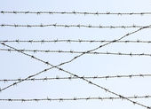 Iron-wire hedge — Stock Photo