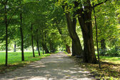 Path in the park — Stock fotografie