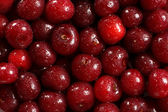 Wet red cherries — Stock Photo