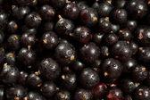 Black garden berries — Stock Photo
