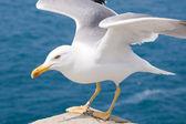 A gaivota — Foto Stock