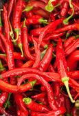 Hot chili pepper — Stock Photo