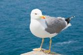 The gull — Stock Photo