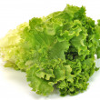 Green Leafy Lettuce — Stock Photo