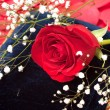 Red Rose on Blue Pillow — Stock Photo