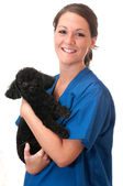Veterinary Assistant with Pet Dog Isolated — Stock Photo