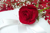 Red Rose on White Pillow — Stock Photo