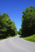 Tarmac road through forest — Stock Photo