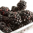 Blackberries — Stock Photo #3544346