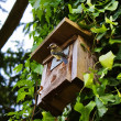 Birdhouse — Stockfoto #3252386