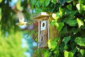 Comedero para pájaros — Foto de Stock