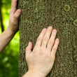 Stockfoto: Foresters hands on trunk of oak.