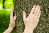 Bosbouwers handen op eiken trunk. — Stockfoto