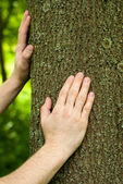 Foresters hands on a trunk of oak. — Stock Photo