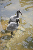 Детские Фламинго — Стоковое фото