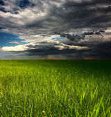 Storm over meadow — Foto Stock