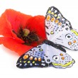 Stock Photo: Poppy and butterfly