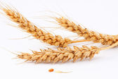 Wheat and grain — Stock Photo