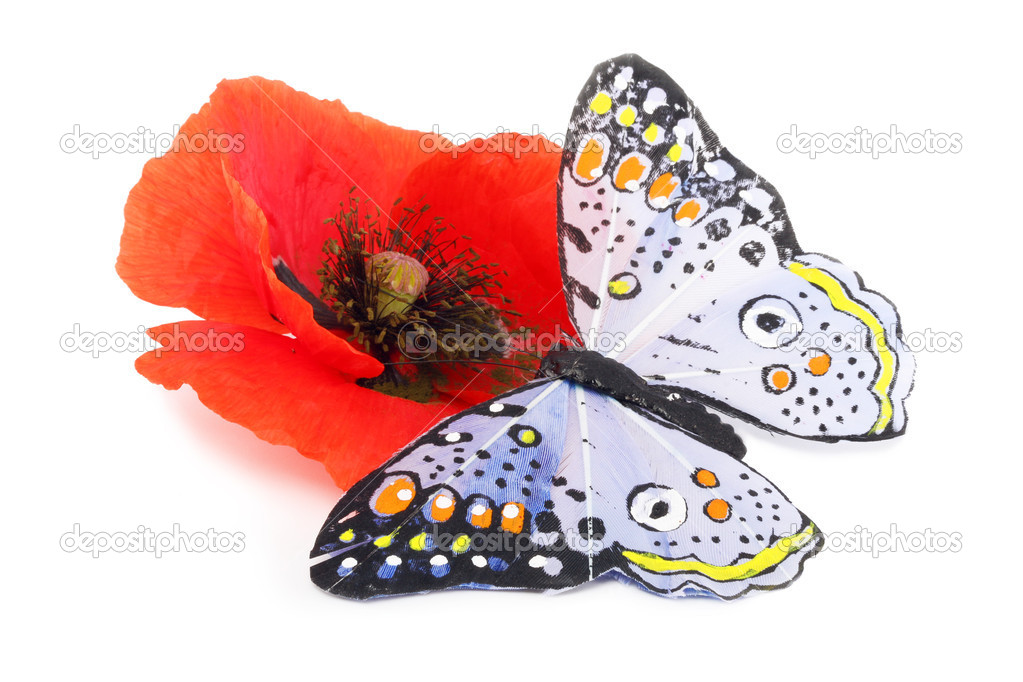 The bright moth of the butterfly sits on the big red flower on a white background  Stock Photo #3344549