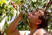 The man a reaping crop of a sweet cherry — Stock Photo