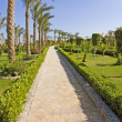 Tropical garden path — Stockfoto #3196064