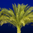 Palm tree against a night sky — Stockfoto