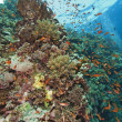Stunning coral reef scene — Stock Photo #3199850