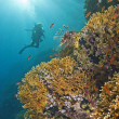 Stock Photo: Stunning coral reef scene