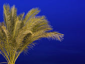 Palm tree against a night sky — Stock Photo