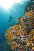 Fantastiska korallrev scen — Stockfoto
