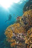 Nádherný korálový útes scéna — Stock fotografie