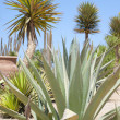 Desert garden with various plants — Lizenzfreies Foto