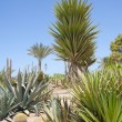 Desert garden with various plants — Stockfoto
