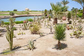 Desert garden with various plants — Stock Photo