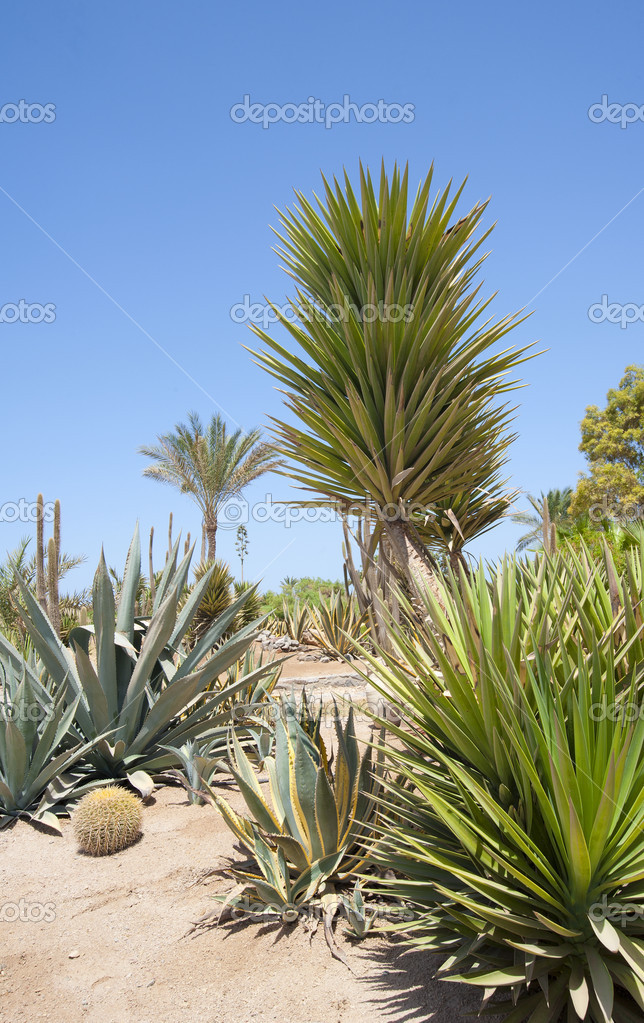 Jard n del desierto con varias plantas foto de stock for Jardin del desierto