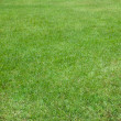 Grass Field - Foto Stock