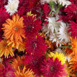 Red orange yellow white pink  bouquet - Foto Stock