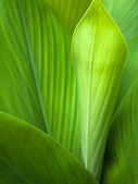 Green leaf background — ストック写真