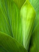 Zelená listová pozadí — Stock fotografie