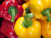 Red Yellow Green Bell Pepper — Stock Photo