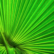 Green palm leaf background — Stock Photo