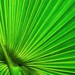 Stock Photo: Green palm leaf background